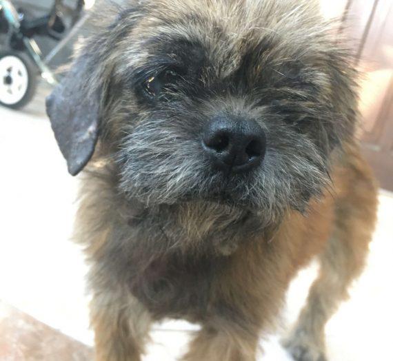 Menemukan dan Merawat Anjing Terlantar: BINGO!